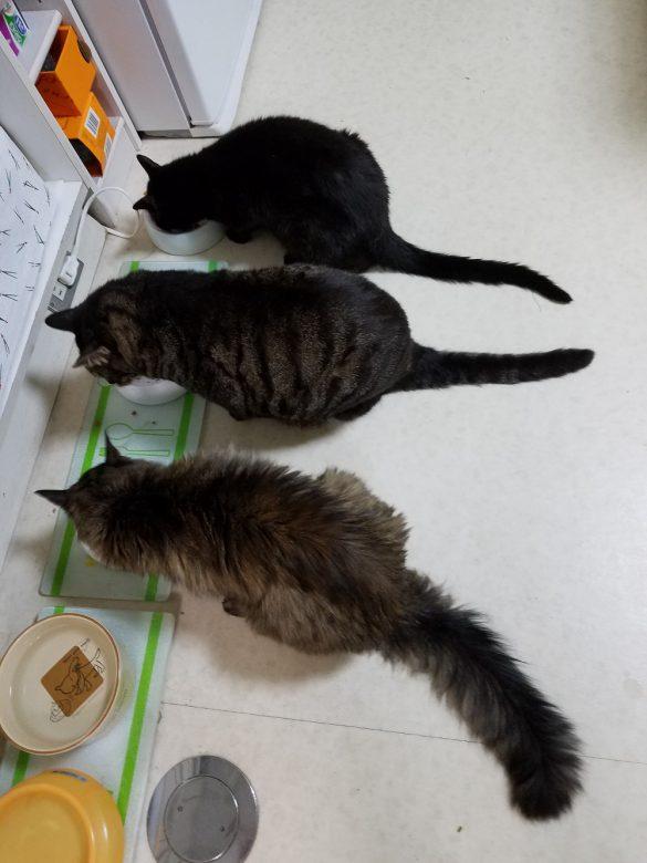 夢中で朝食を食べる三匹。手前からスンデ、チャンジャ、ジジ。僕たちも美味しく食べてるよ!