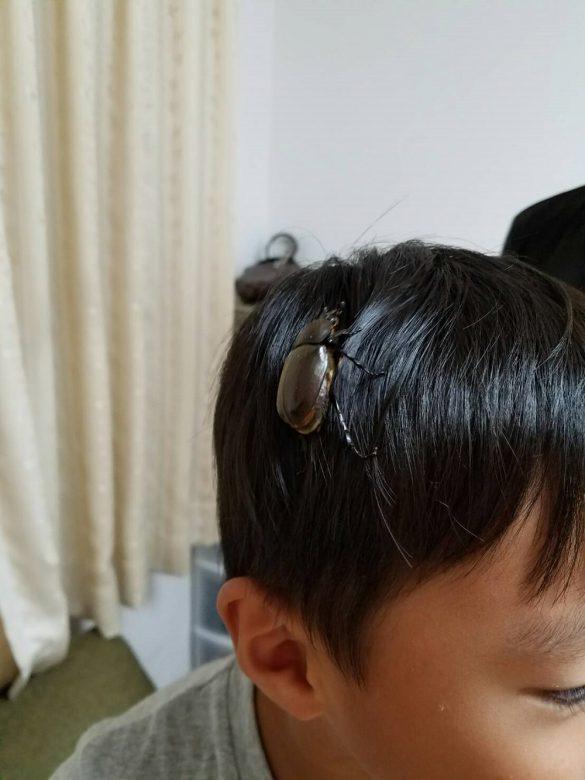 孫の髪にしがみつくカブ子。