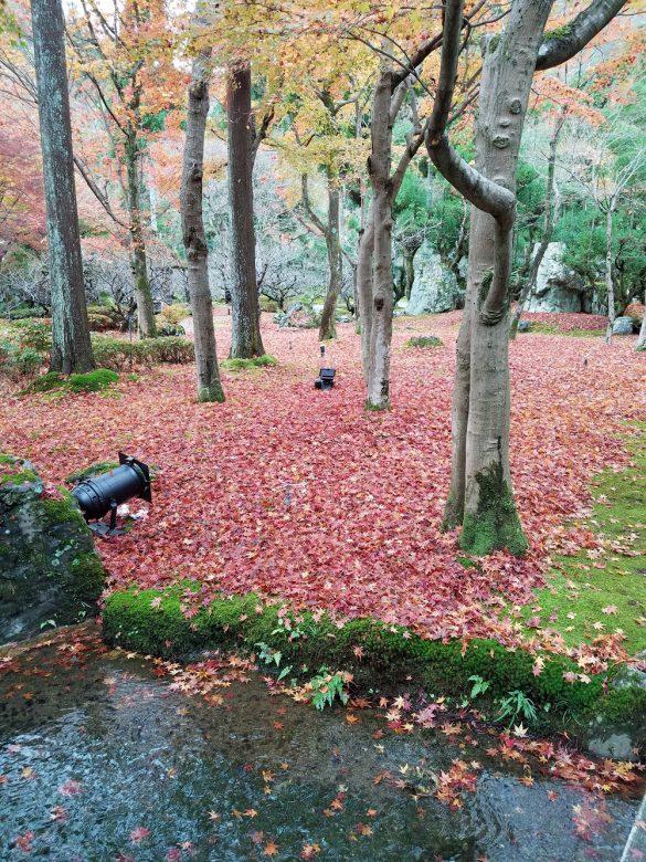 雨に濡れた落ち葉のじゅうたん。息をのむ美しさでした。