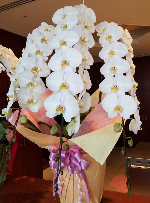 こちらは胡蝶蘭。さすがの貫禄!
